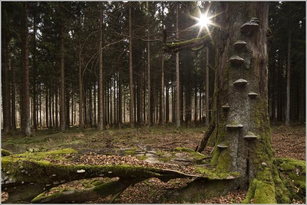 Frank-Körver-Naturfotografie-Naturwald-16047849
