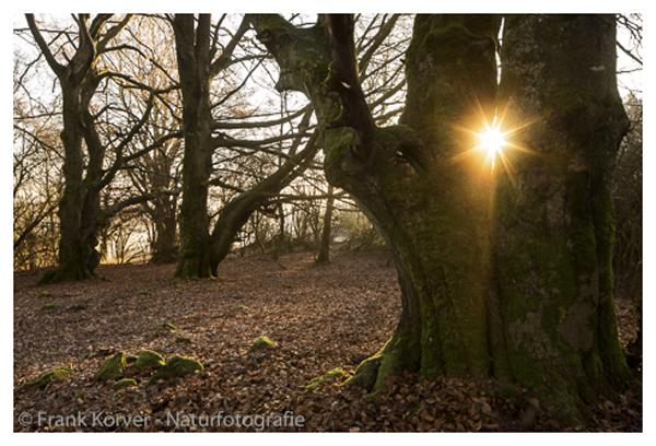 Baumveteranen und Sternenbahnen im Westerwald